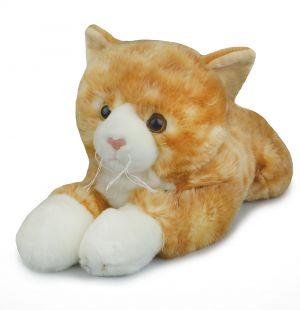 CAT GINGER FRIENDLEE (D)